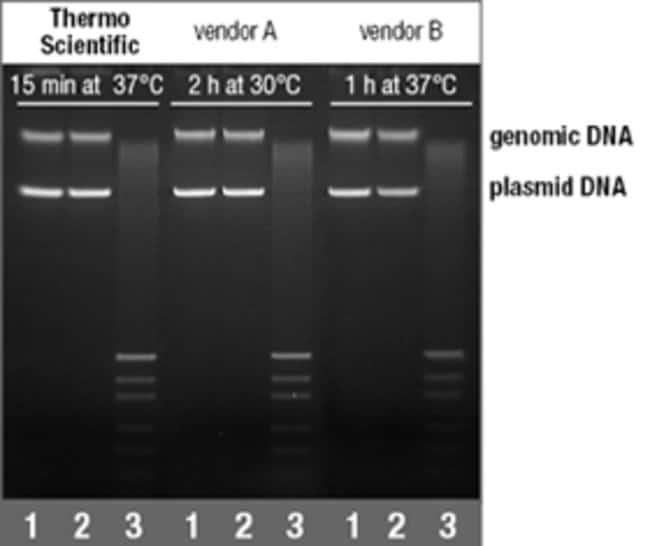 Plasmid DNA methylated for 15 min using Thermo Scientific M.SssI is protected from HpaII cleavage