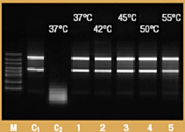 Thermostability of RiboLock RNase Inhibitor