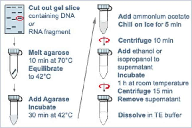 DNA purification from low melting point agarose with Agarase