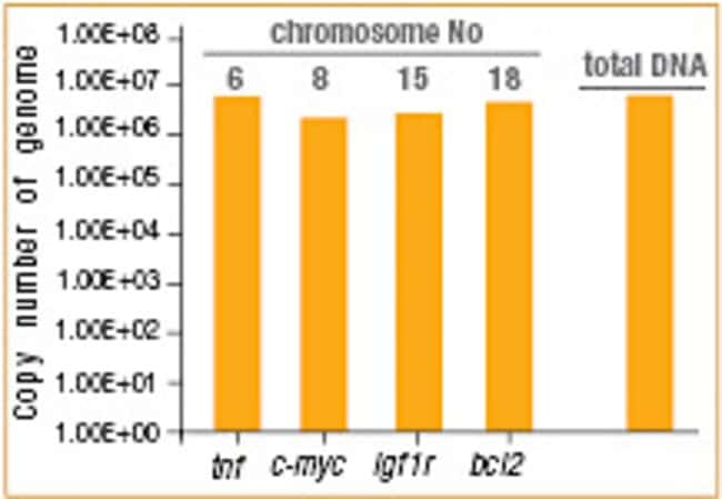 Unbiased amplification of human genomic DNA with phi29 DNA Polymerase