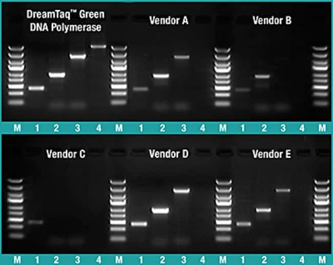 Longer PCR fragments, higher yields with DreamTaq Green DNA Polymerase