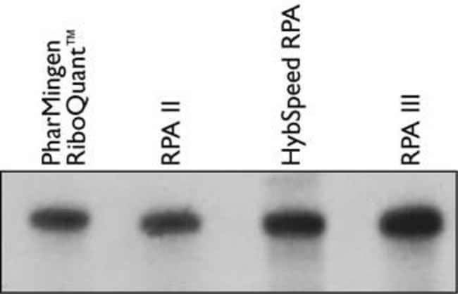 High specific activity, gel-purified beta-actin RNA probe (50,000 cpm) was incubated with 1 µg mouse liver RNA in 10 µl of hybridization buffer overnight at 42°C or ten minutes at 60°C for the HybSpee