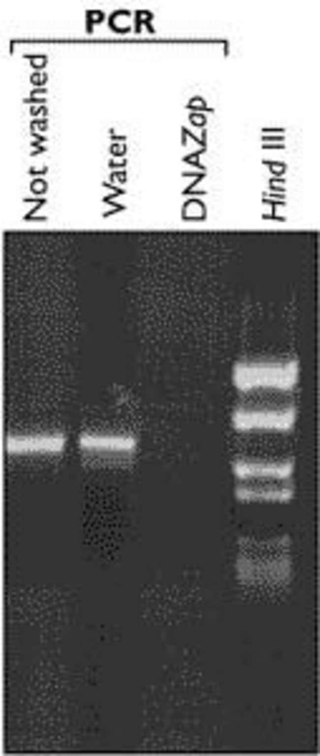 Effect of DNAZap™ on plasmid DNA.