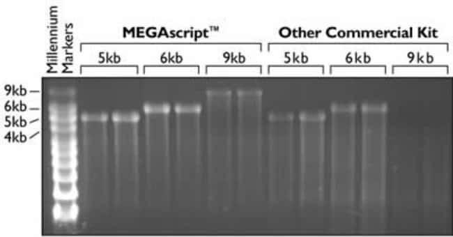 Transcription of long templates with the MEGAscript™ Kit and a competitor's kit.