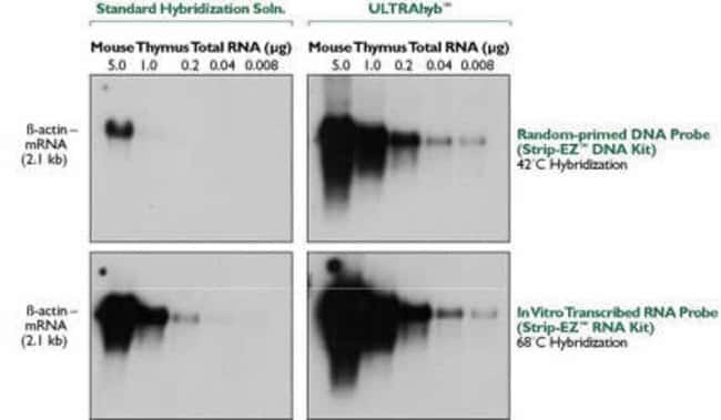 ULTRAhyb™ versus a Standard Hybridization Buffer Using DNA and RNA Probes