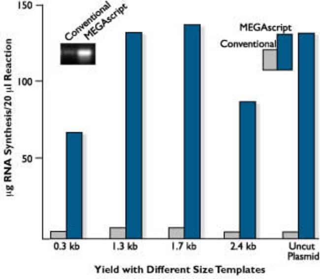 Effect of template size on yield of MEGAscript™ reactions.
