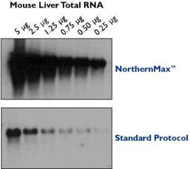 Comparison of NorthernMax™ vs Standard (Maniatis) Northern Blots