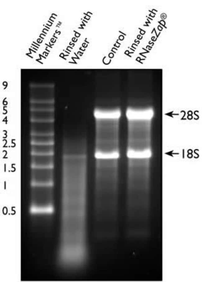 5 µg of RNase A were vacuum-dried onto the bottom of two microcentrifuge tubes. One tube was then rinsed with water, and one tube was rinsed with RNaseZap®. 2 µg of total RNA were added to each