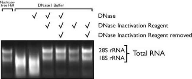 Removal of divalent cations by DNase Inactivation Reagent.