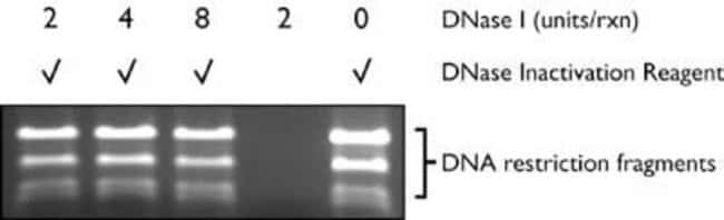Inactivation of DNase I by DNase Inactivation Reagent.