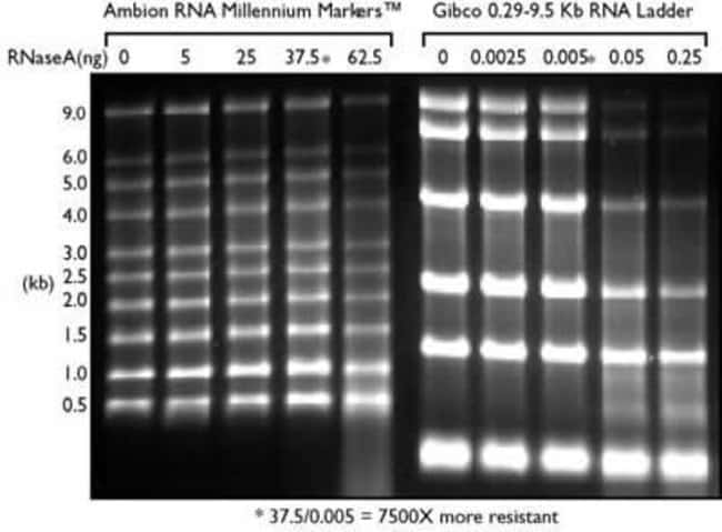 Stability of RNA Markers When Exposed to RNase A