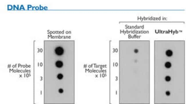 ULTRAhyb™ vs Standard Hybridization Buffer