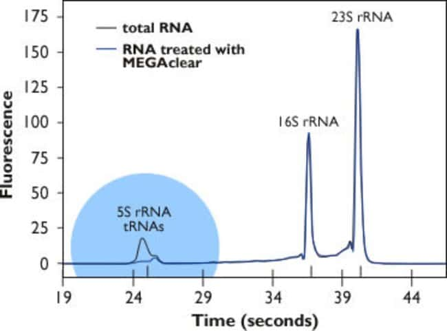 Efficient removal of 5S rRNA and tRNA from bacterial RNA with the MEGAclear™ Kit.