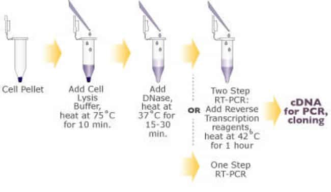 Cells-to-cDNA II Procedure