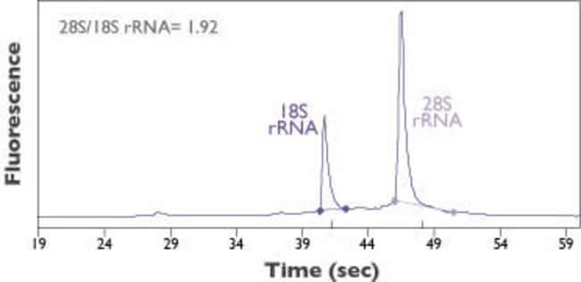 RNA isolated using the automated RNAqueous™-96 protocol.