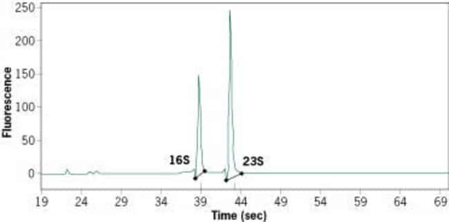 Electropherogram of Total RNA Isolated with the RiboPure™-Bacteria Kit