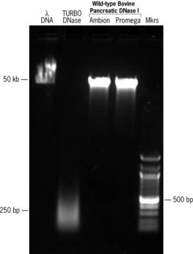TURBO™ DNase provides superior elimination of DNA from <i>in vitro</i> transcription reactions.