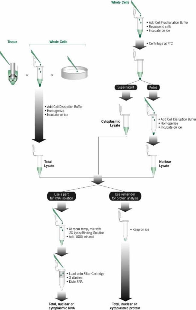 PARIS™ Procedure Overview