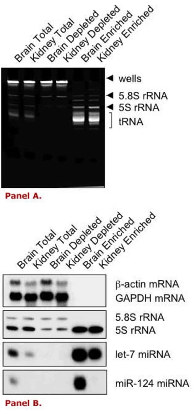 Small RNA enrichment from mouse tissues with the mirVana™ PARIS™ Kit.
