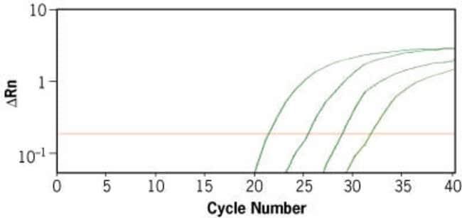 qRT-PCR Detection of VEG-F