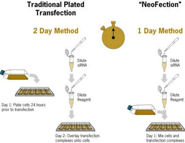 Traditional Plated Transfection vs Neofection with siPORT™ NeoFX™