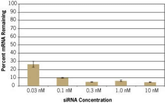 Efficient Transfection with Low siRNA Concentration
