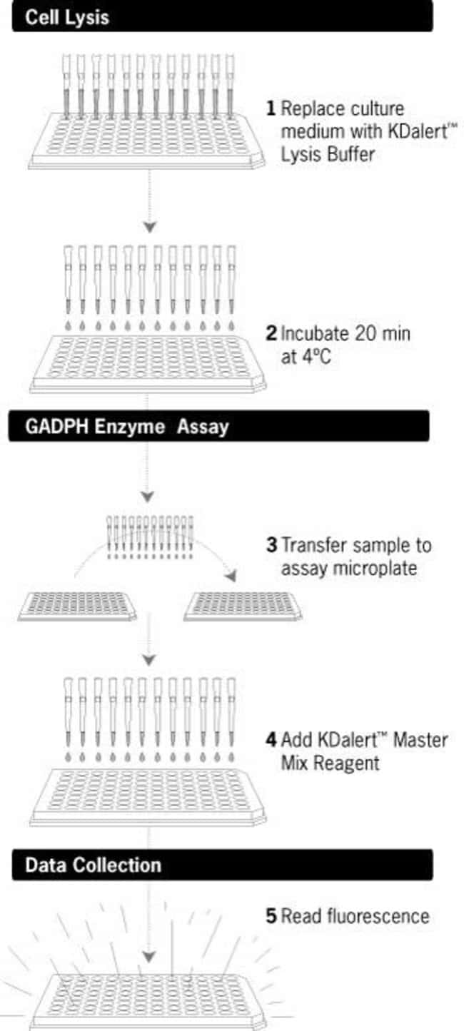 KDalert™ GAPDH Assay Kit Protocol Schematic