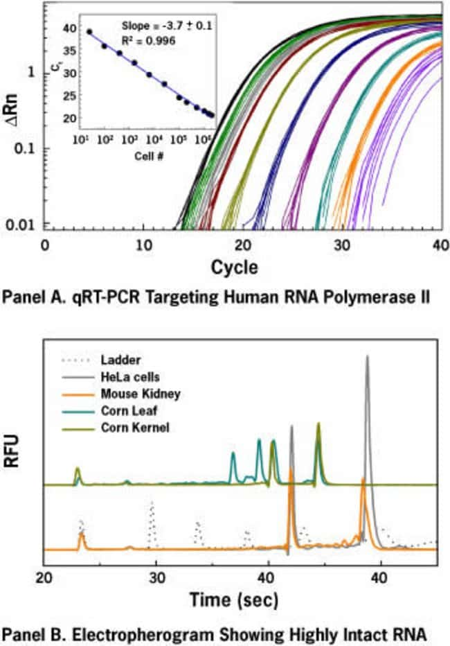 Recovery of total RNA from a wide range of cell numbers and sample types.