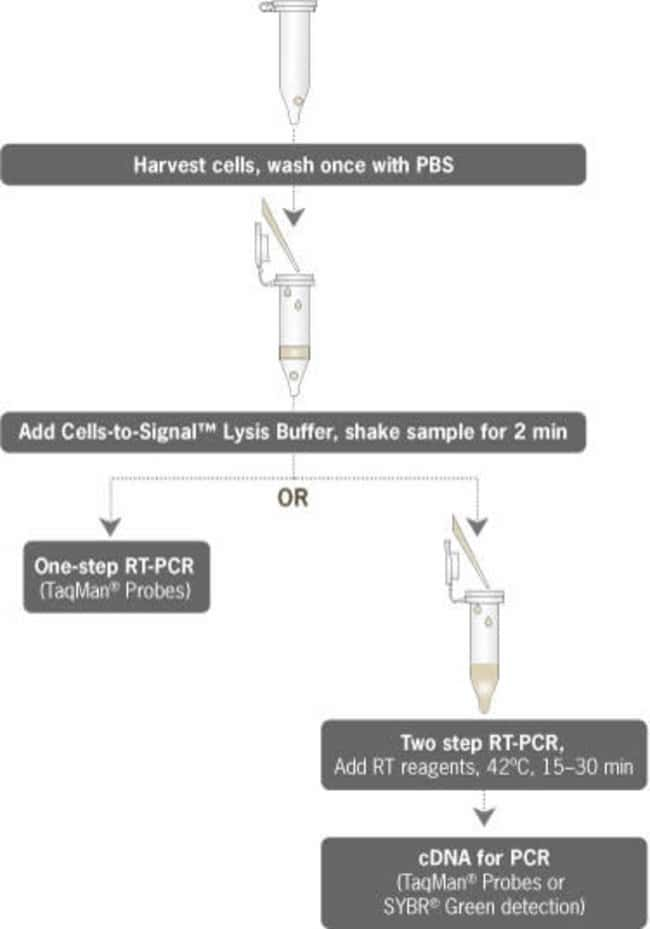 Cells-to-Signal™ Procedure