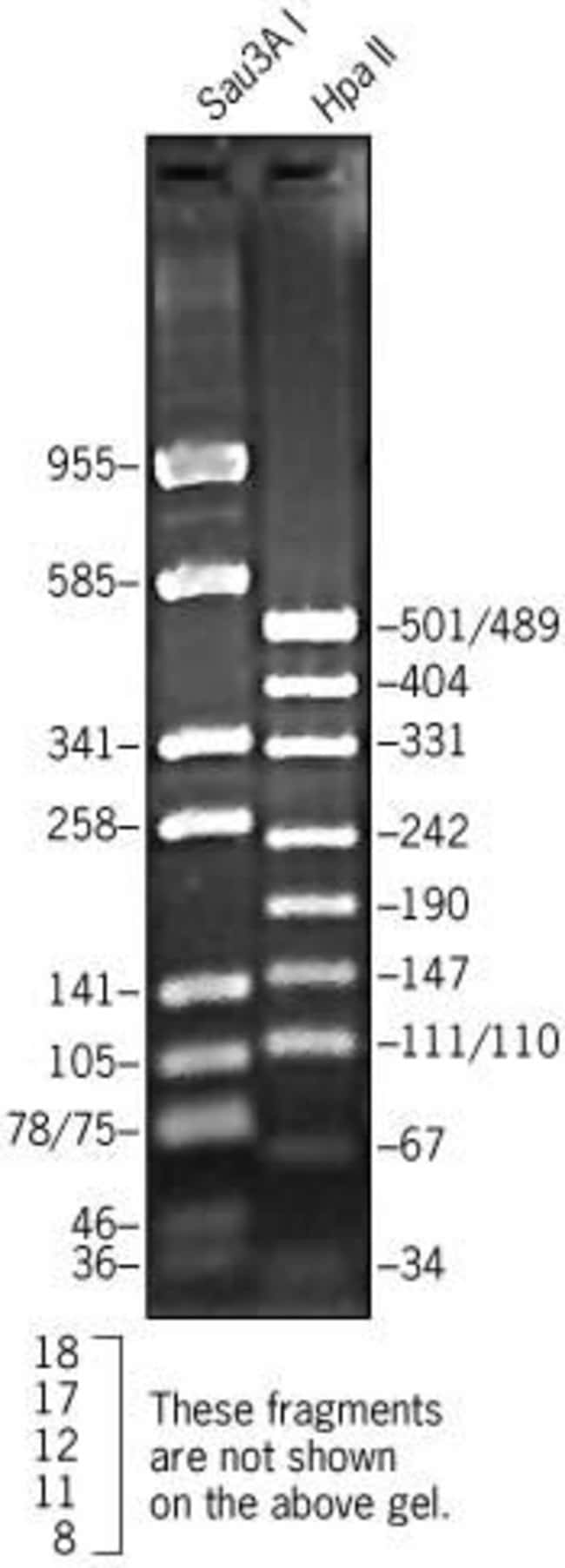 pUC19 DNA, digested with Sau3A I or Hpa II