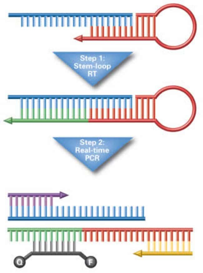 TaqMan® MicroRNA Assay Primer Mechanism