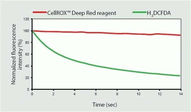 Photostability analysis of CellROX® Deep Red reagent.