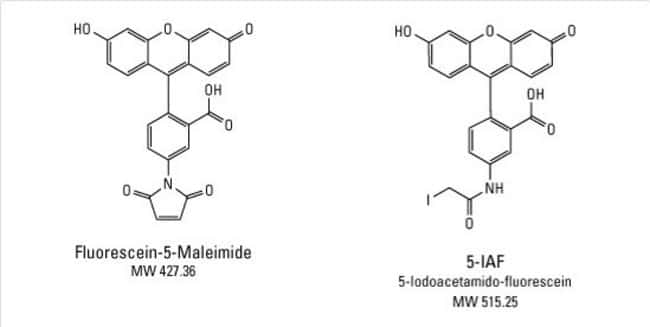 Chemical structures of Fluorescein-5-maleimide and 5-IAF
