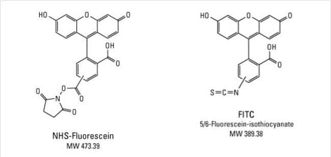 Chemical structures of FITC and NHS-Fluorescein
