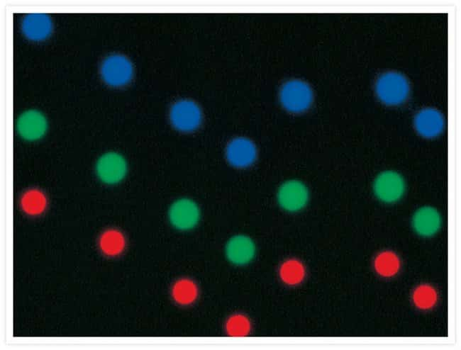 Multiple exposures of a prepared slide from our MultiSpeck™ Multispectral Fluorescence Microscopy Standards Kit (Cat. no. M7901). This kit provides fluorescent MultiSpeck™ microspheres that exhibit th