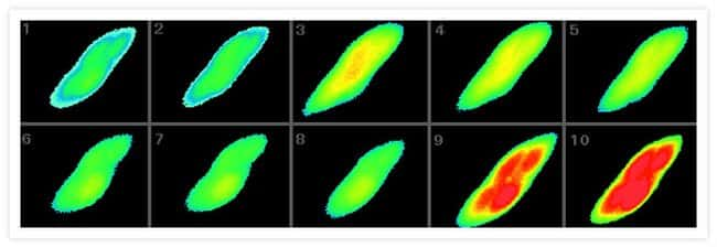 Pseudocolored images of changes in intracellular free Ca<sup>2+</sup> in AtT-20/D16v-F2 cells, monitored at 9 sec intervals with fluo-4, AM (F14201, F14202, F14217, F23917).