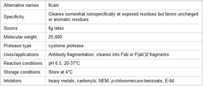 Properties of Ficin Protease