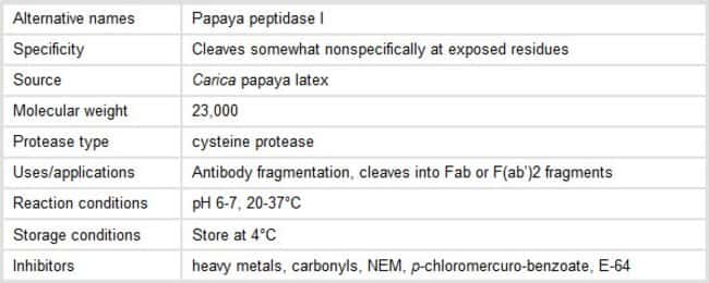 Properties of Papain Protease
