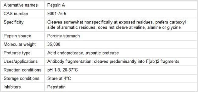 Properties of Pepsin Protease