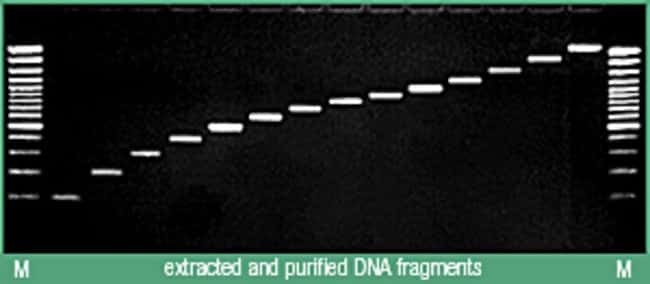 Recovery of 100 to 3000bp DNA fragments using the Silica Bead DNA Gel Extraction Kit