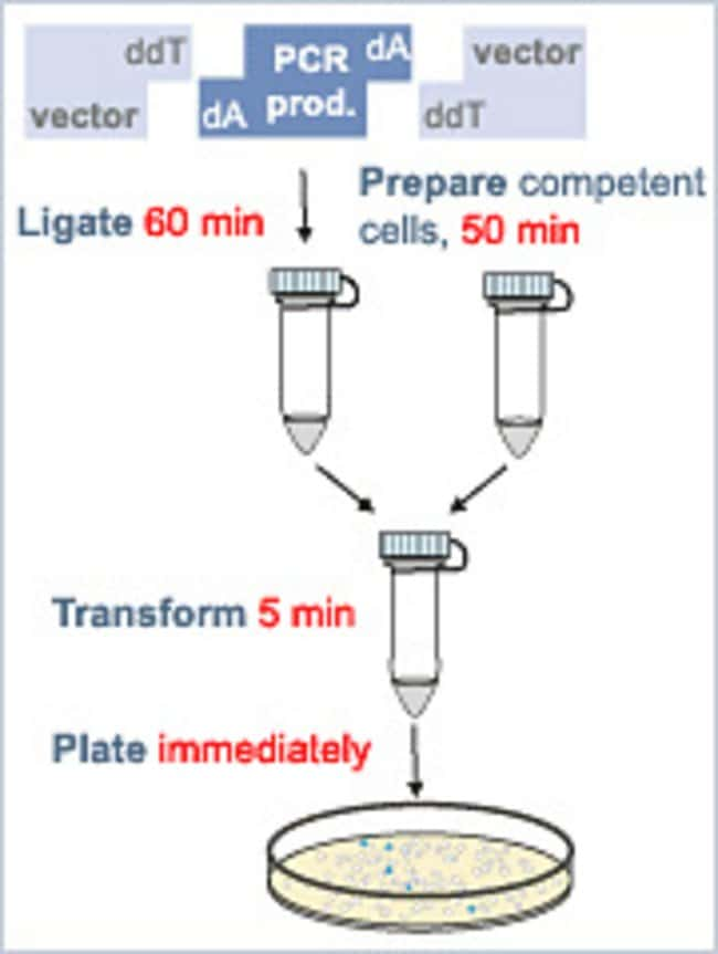 PCR product cloning procedure