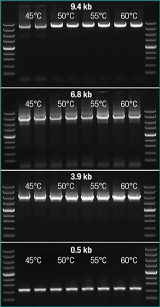 Efficient cDNA synthesis at a wide temperature range