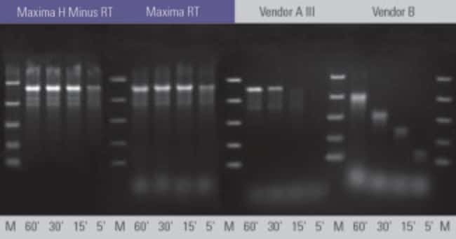 Synthesis of cDNA at 50°C for 5, 15, 30 and 60 minutes using 1 µg of 7.5 kb RNA transcript as a template using Maxima H Minus First Strand cDNA Synthesis Kit and other kits fo