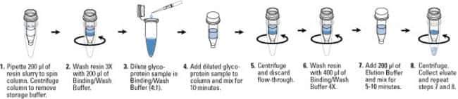 Glycoprotein Isolation Kit Protocol