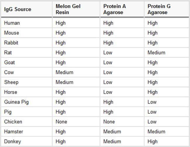 Relative performance characteristics (yield) of Thermo Scientific Melon Gel Resin, Protein A Agarose and Protein G Agarose