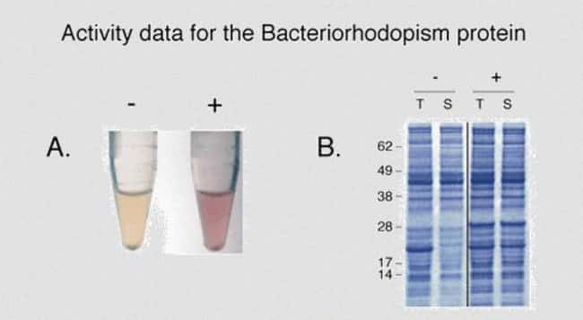 Expression and activity data for bacteriorhodopsin using the MembraneMax™ kits