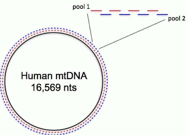 Precision ID mtDNA Whole Genome Panel coverage