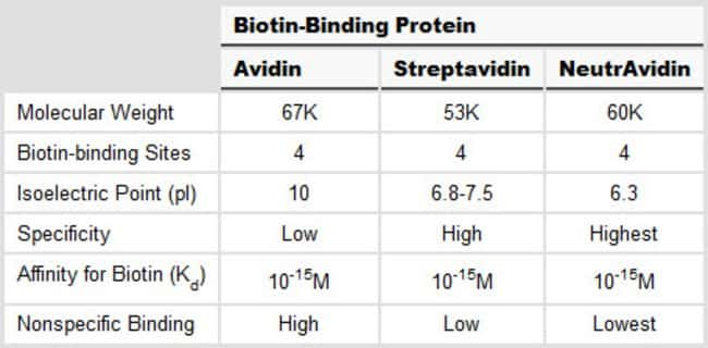 Comparison of biotin-binding proteins