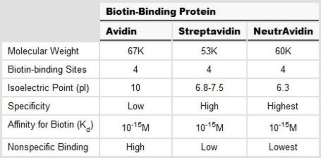 Comparison of biotin-binding proteins