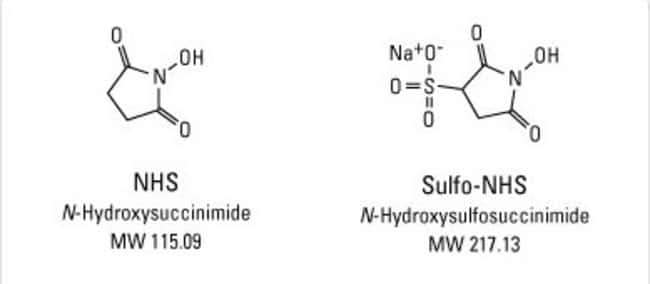 Chemical structures of NHS and Sulfo-NHS reagents
